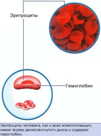 нормальный уровень общего холестерина крови
