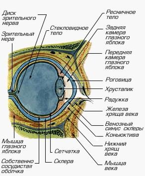 http://diabet-gipertonia.ru/diabet/img/glaz.jpg