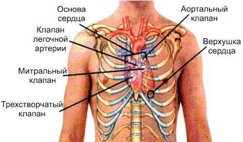 проекция сердечных клапанов