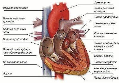 Журнал артериальная гипертензия 2011